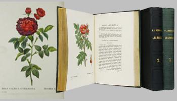 2. 17Jan 15.REDOUTÉ Pierre-Joseph. Les Roses copie